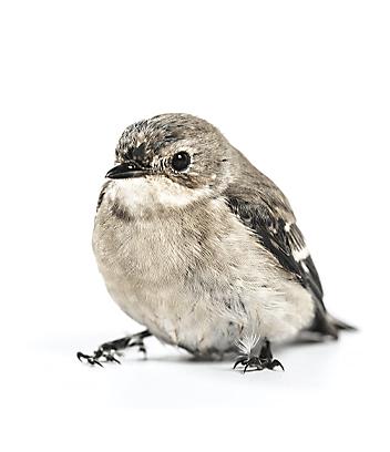 Shop Bird Food & Accessories