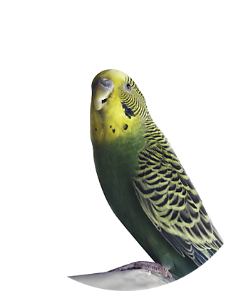 Shop Birds