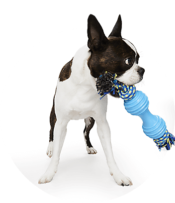 Shop Dog Food & Accessories