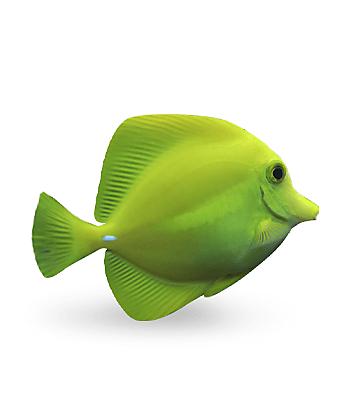 Shop Fish Food & Accessories