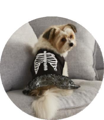 Halloween Pets Costumes & Treats