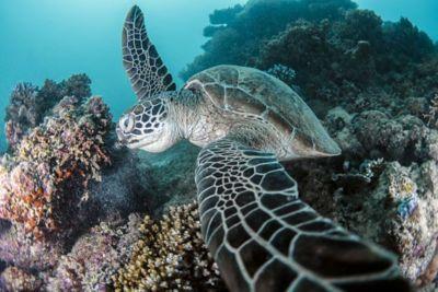Under the Sea Turtle Weekender Bag