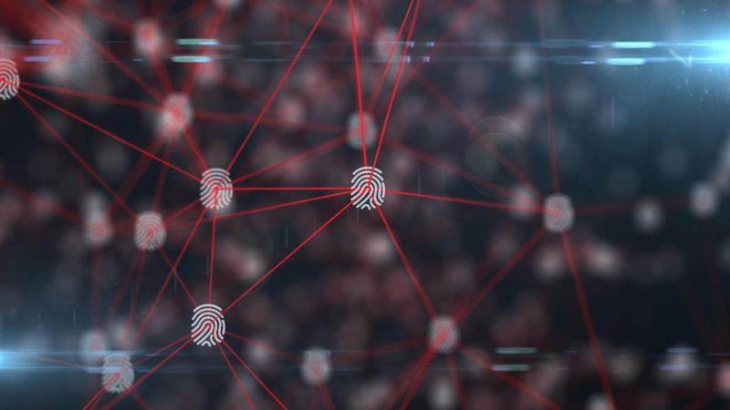 network of lines and fingerprints