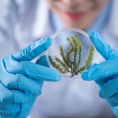 Plant in a petri dish. Science.