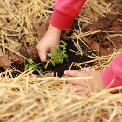 Child planting a small plant in dirt.